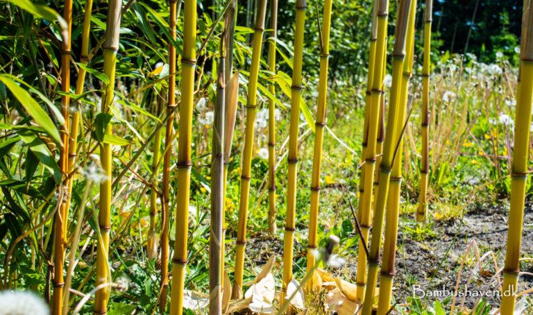 Bambushaven Brande